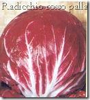 radicchio_rosso_palla_di_fuoco_2008